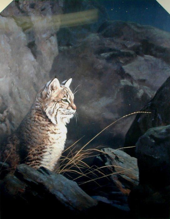 Night Watch - Bobcat